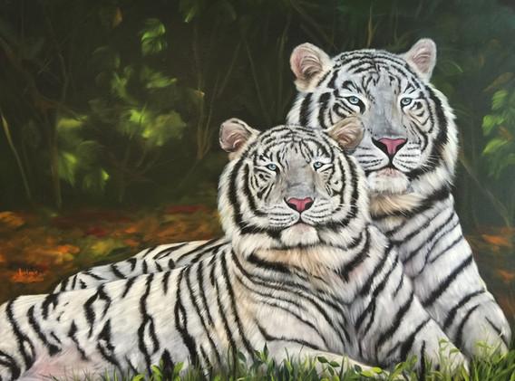 Weisses Tigerpaar