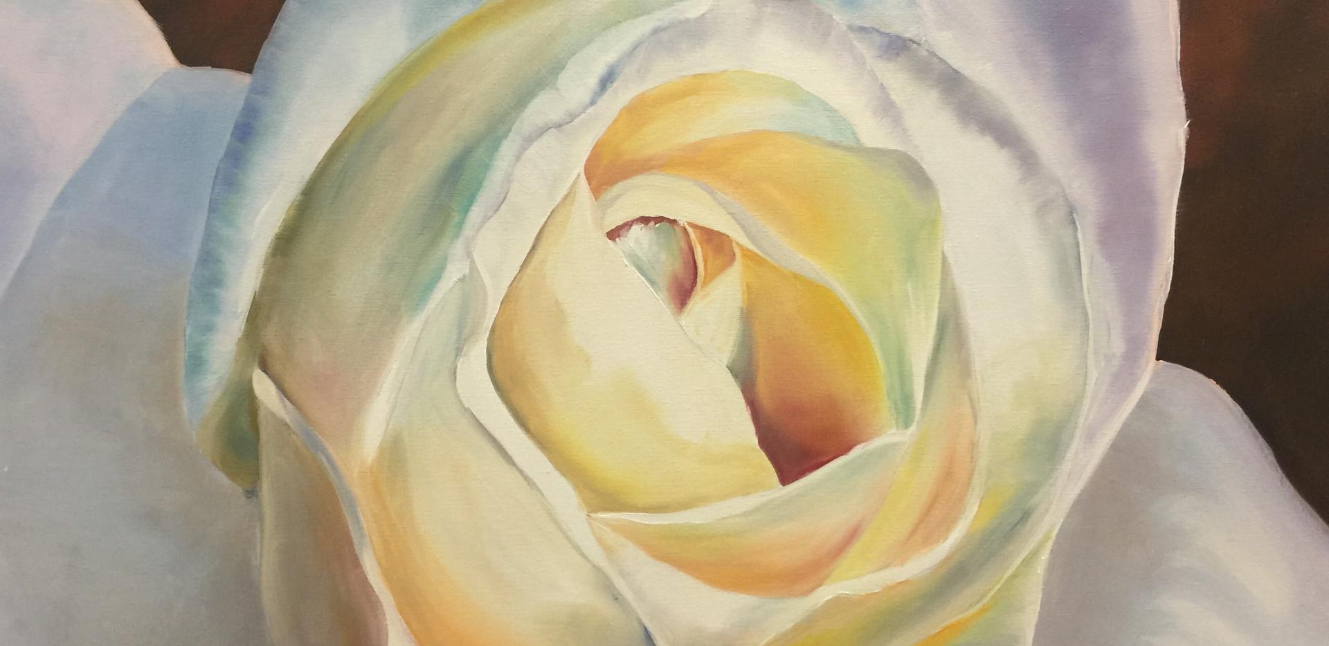 Weisse Rose 2018  50x60cm.jpg