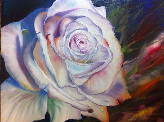 Weisse Rose 1 GJ.jpg