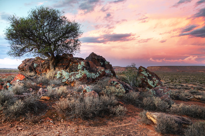Bullock Bush, Flinders Ranges