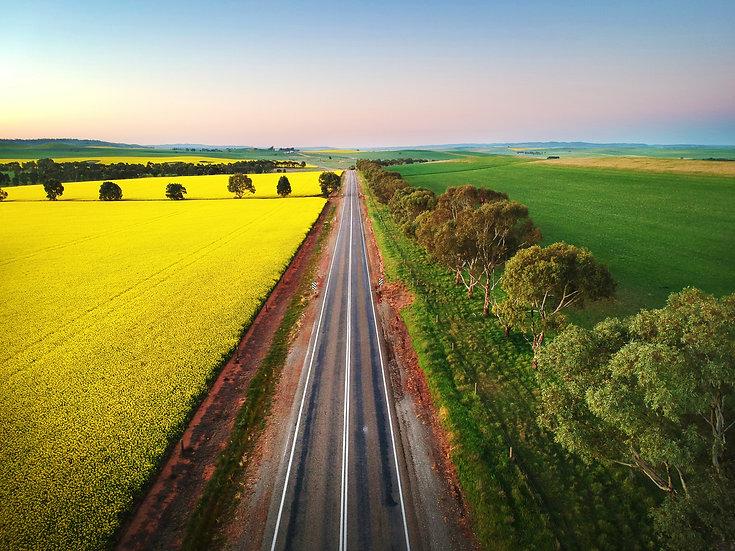 Canola Roads