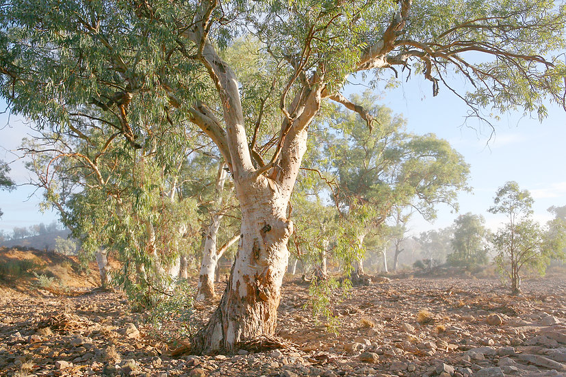 Misty Morning in Emu Creek