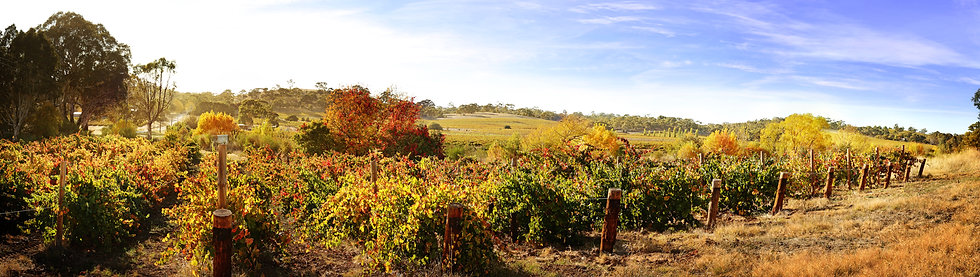 Autumn in the Clare Valley