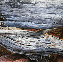 Dry Wood Textures