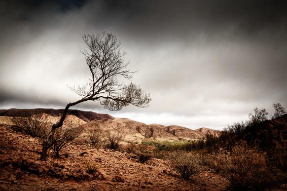 treeplay.JPG