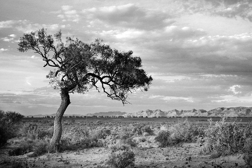 A Timeless Land