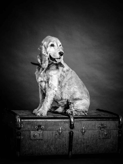 puppy-dog-pet-photo-shoot-photographer-w