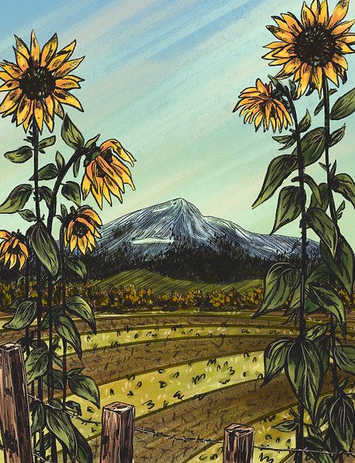 Sunflower Daze Print