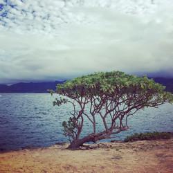 Photographie voyage Hawaii