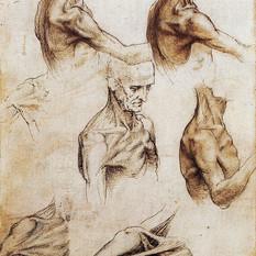 da-vinci-anatomical-drawings-science-sou