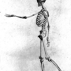 B.S._Albinus._The_Anatomy_of_painting...