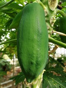 groene papaya.jpg