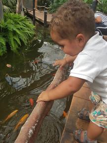 Visjes kijken in een van de vijvers van