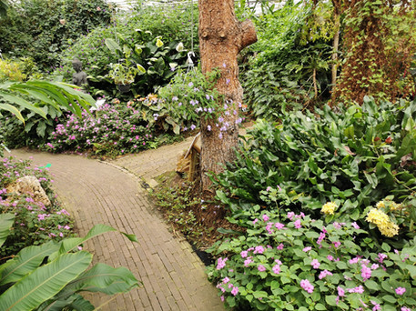 Vlindertuin Vlindorado Noord Holland
