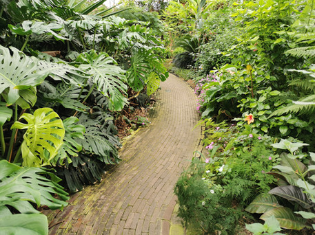 Vlindertuin Noord Holland