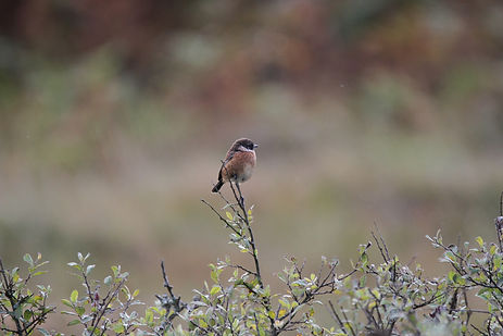 Bird on branch of bush