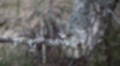crested tit sitting on a lichen