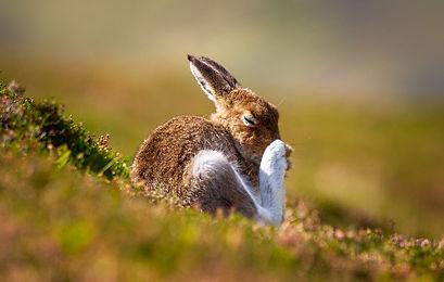 Hare Itch.jpg