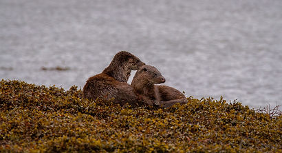 Otter15.jpg