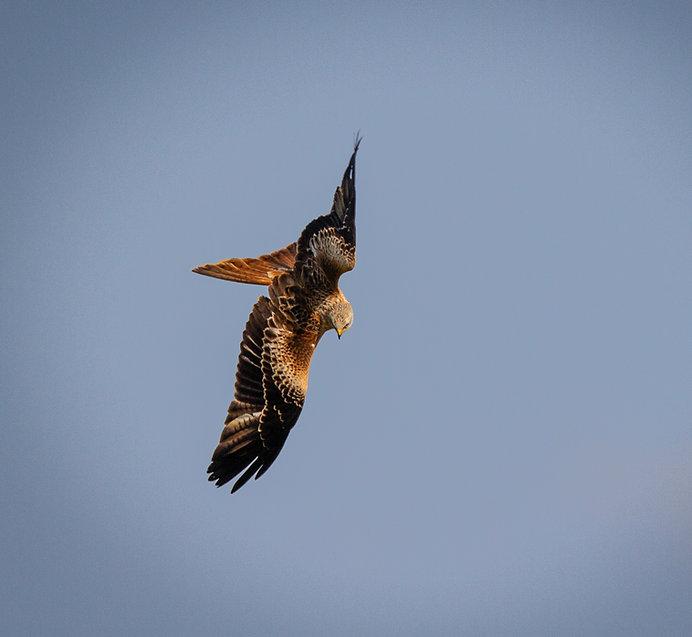 Kite12.jpg