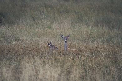 Red Deer (14 of 14).jpg