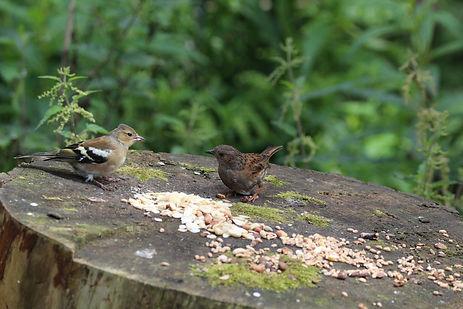 2 birds on tree stump