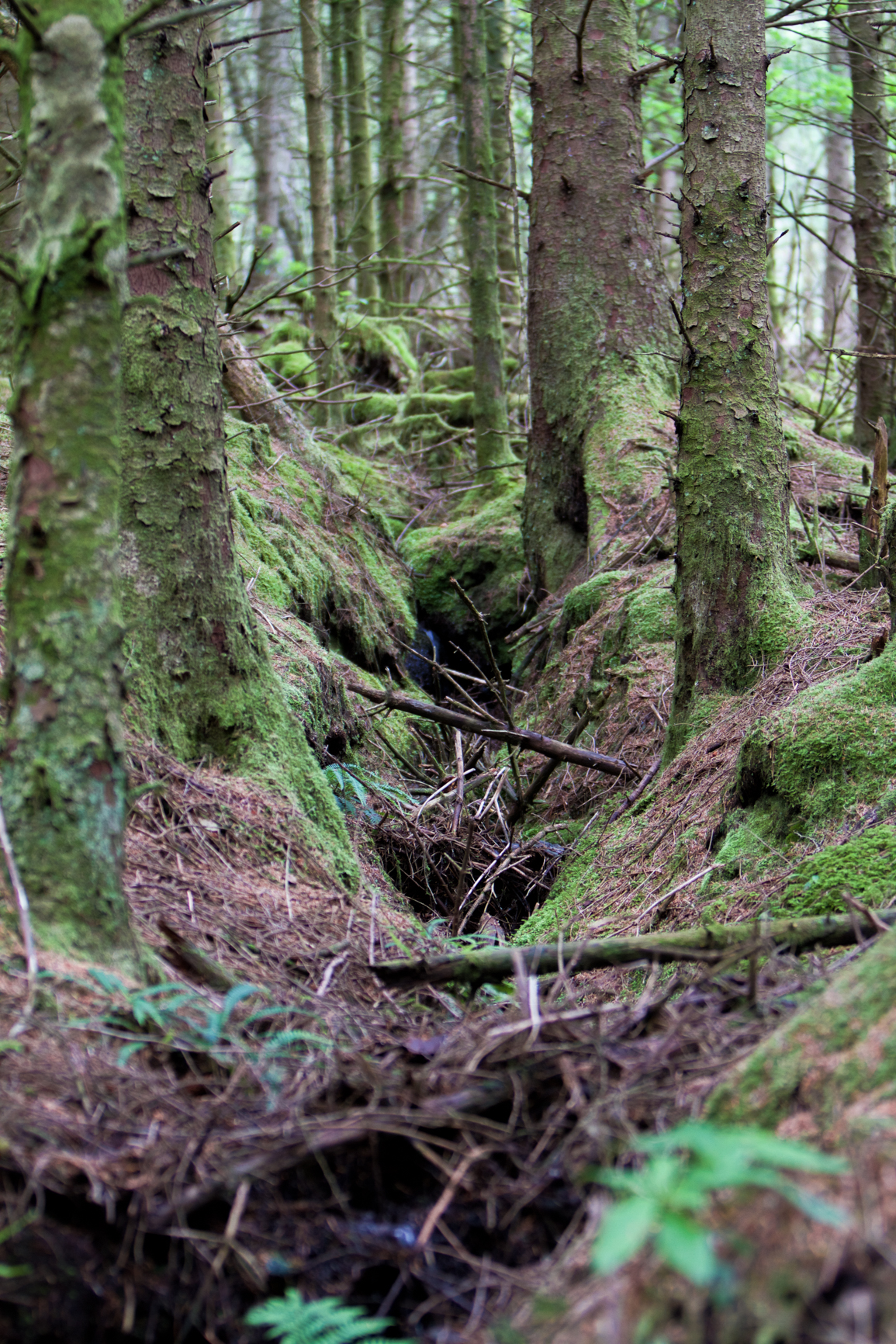 isle-of-arran-forest
