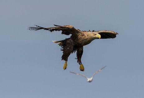 Eagle13.jpg