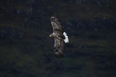 Eagles (5 of 9).jpg