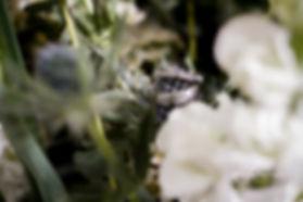 Flowers and Ring Edinburgh Wedding Photographer