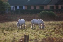 white-horses