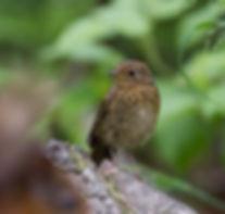 Baby robin on branch