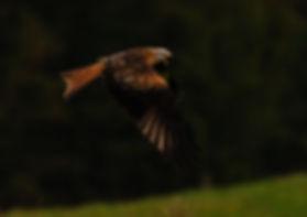 Kite6.jpg