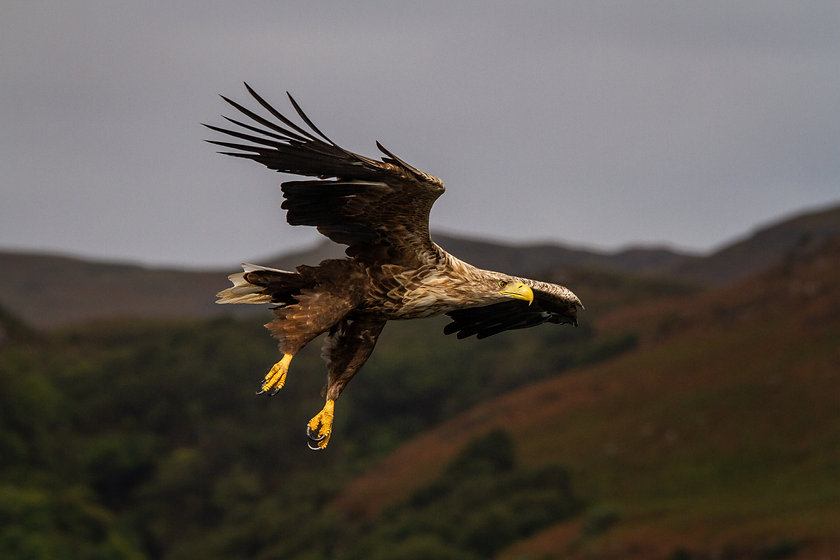 Eagle16-0436.jpg