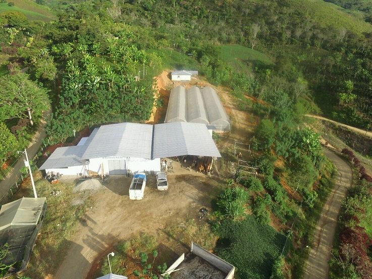 Ecuador Coffee Plant