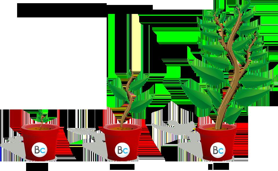 מחזור החיים של העסק