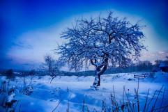 Winter-3712.jpg