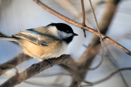 Bird2952.jpg