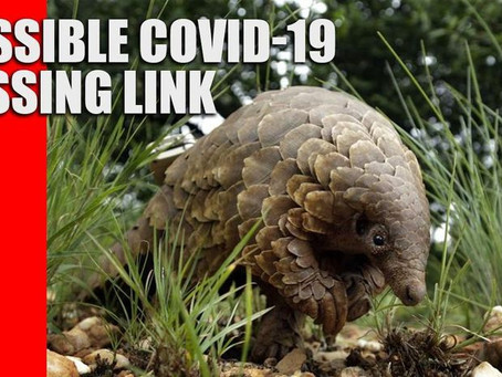 COVID-19 Could Have Originated From Recombination Of Bat And Pangolin Coronaviruses: Study