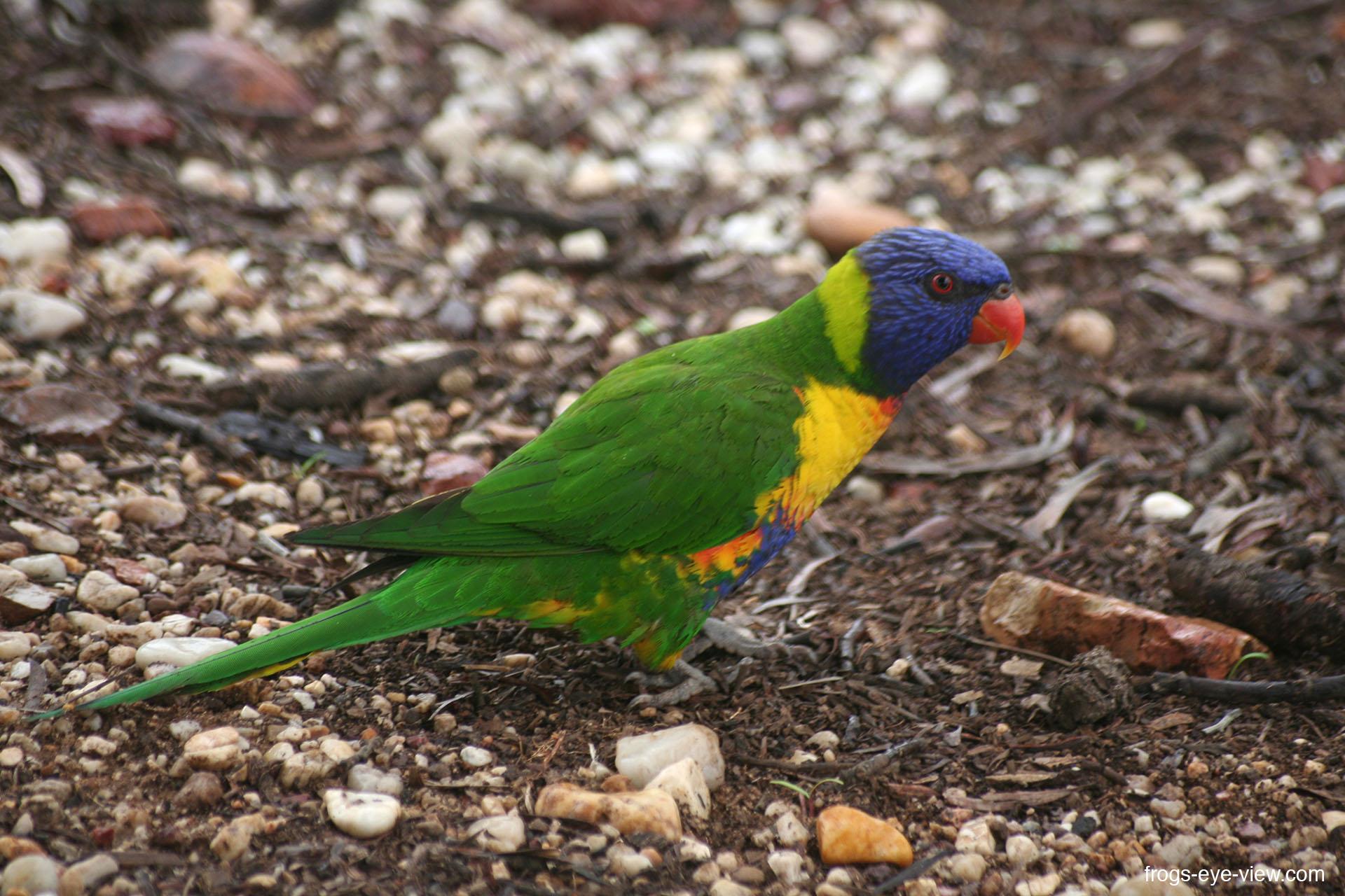 43_bird Kopie