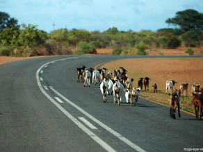 Rote Linie - Weg nach Botswana
