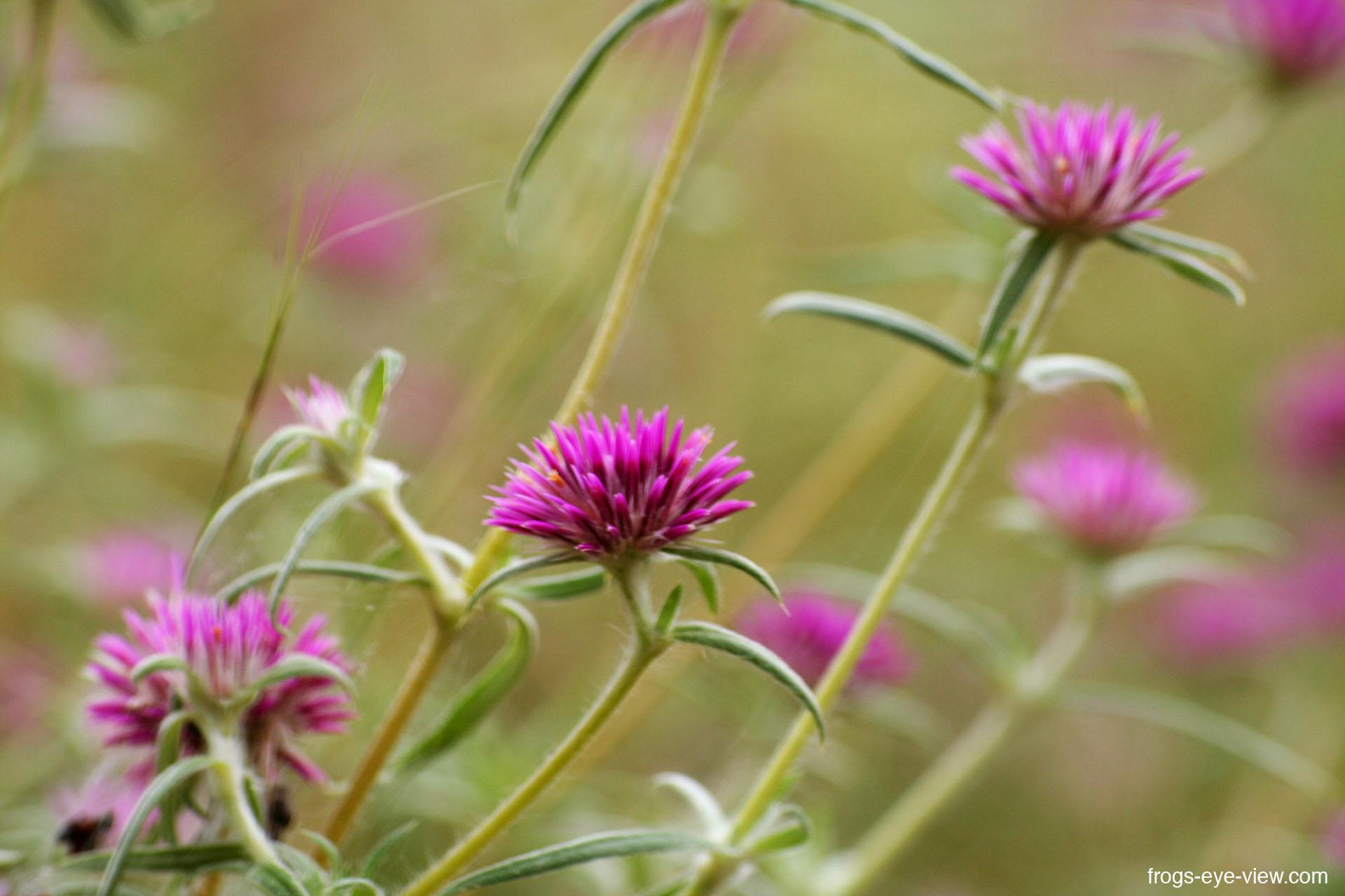38_violett flowers 2 Kopie