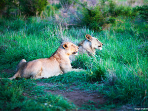 Hlana Game Reserve