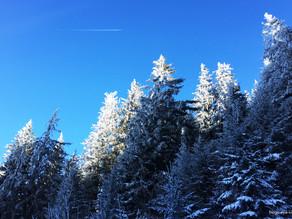 Skitour Rigi
