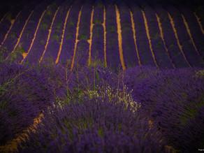 Lavendelfelder Valensole & Umgebung
