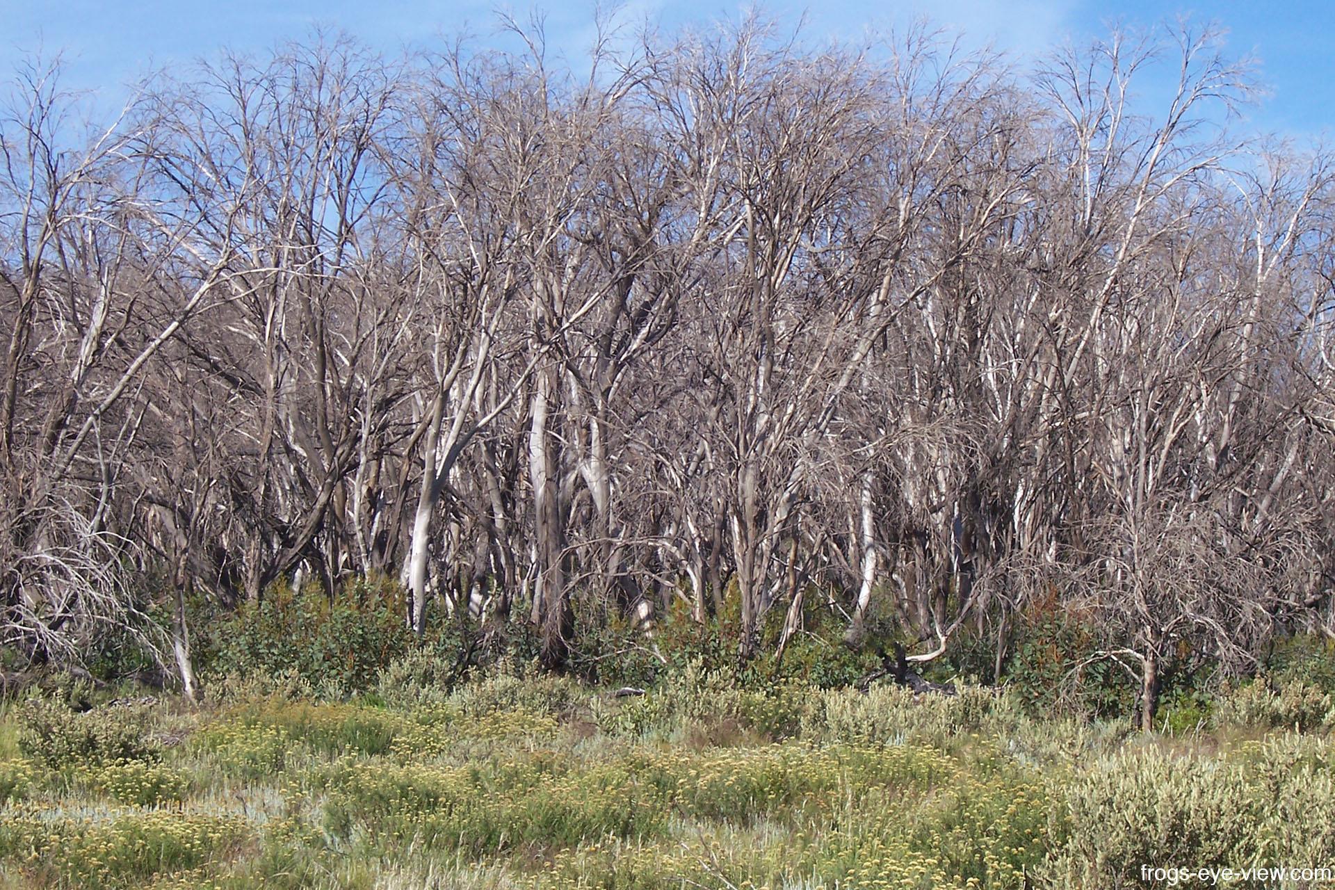13_Burnt forest Kopie