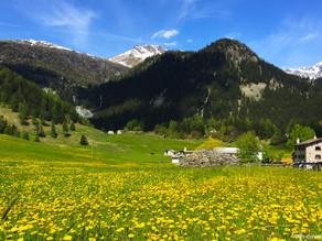 Alp Grüm & Rhätissche Bahn