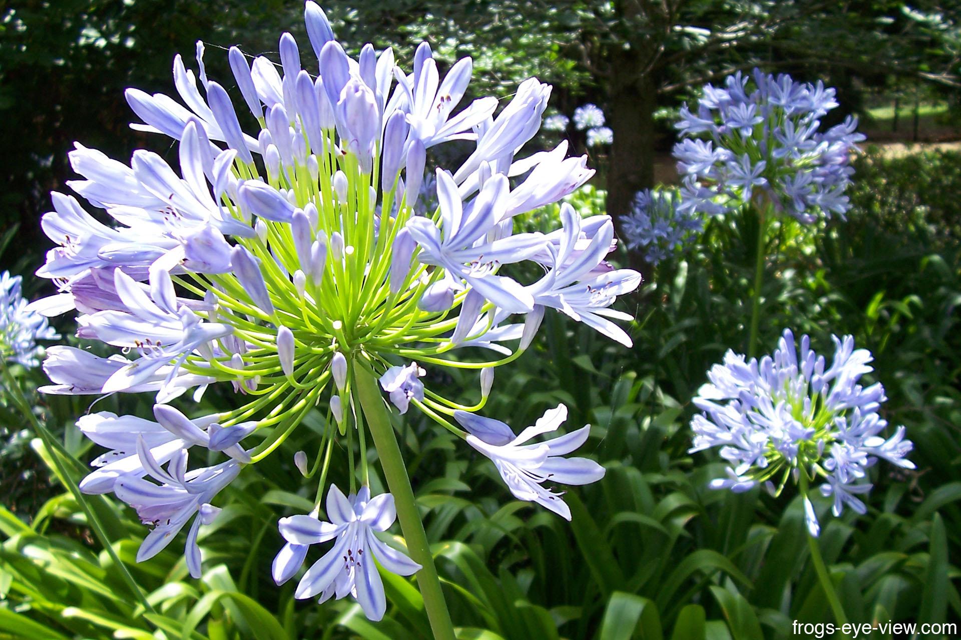 05_Blue flowers Kopie