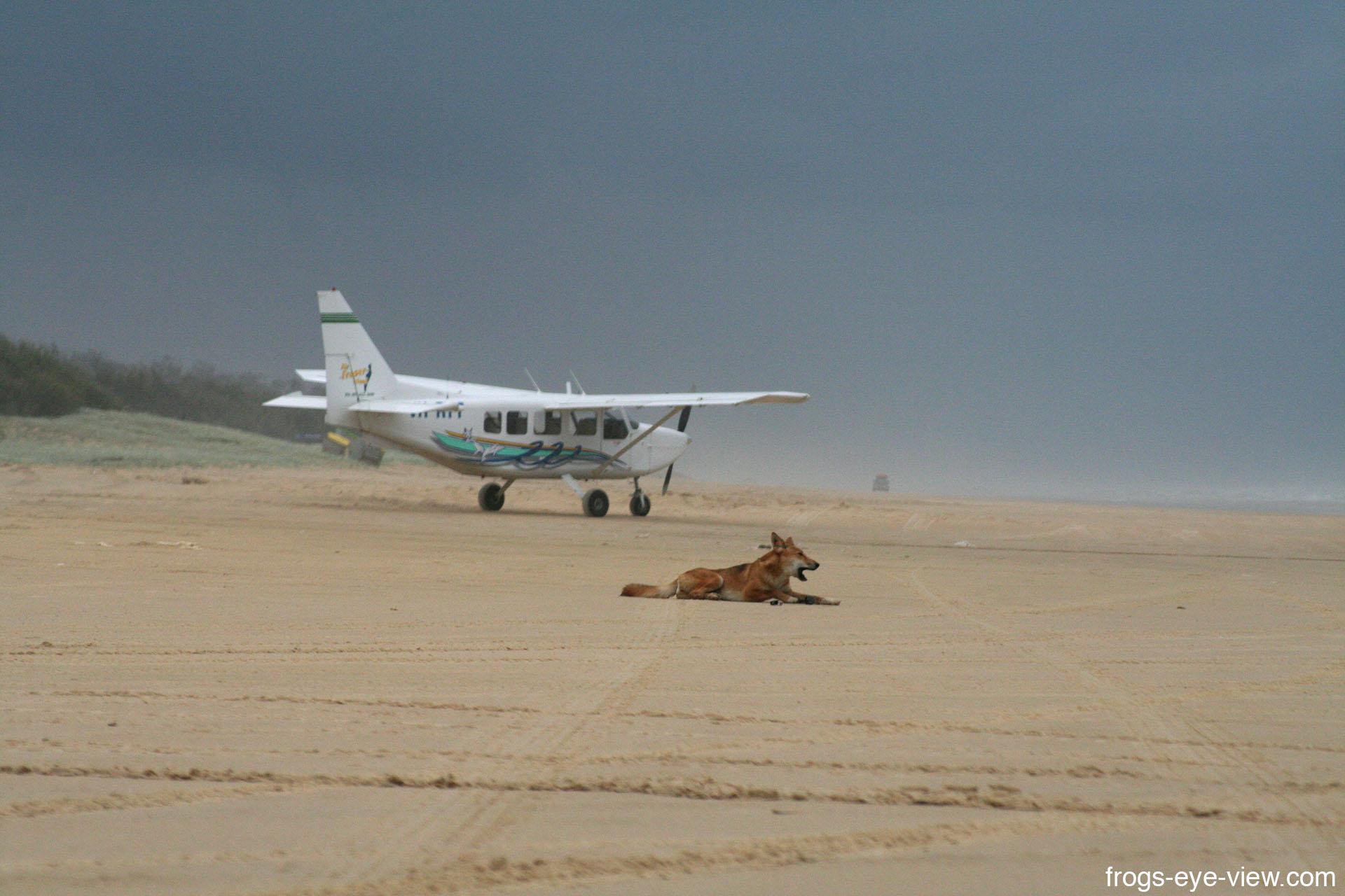 02_Plane and Dingo Kopie