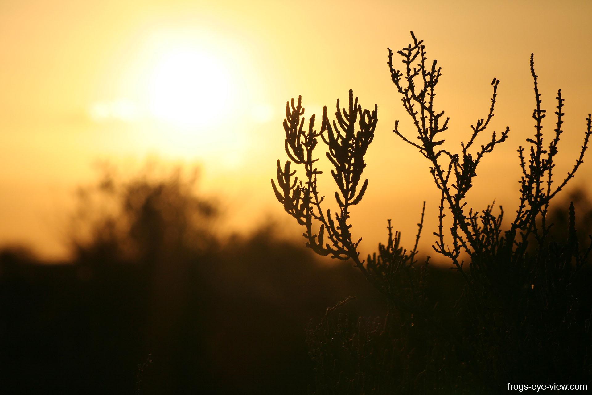 20_Sunset in Desert 2 Kopie